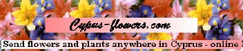 Cyprus flowers for your gifts, bouquets, wines and champagnes delivered throughout Cyprus