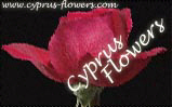 Send flowers and plants online in Cyprus
